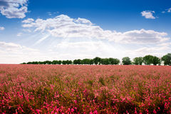 Landscape. The magnificent landscape of flower fields separated by trees Stock Images