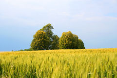 Landscape. Digital photo of a area taken in hungary Stock Images