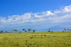 Landscape. Your typical Australian landscape with vast areas of lush green grass used for grazing, gum trees and brilliant blue skies and white puffy clouds stock photography