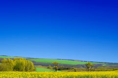 The landscape. Yellow and green fields and blue sky Stock Photography
