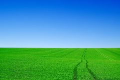 The landscape. The green fields and blue sky Stock Photo