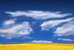 Landscape. Yellow field, landscape with blue sky and white clouds Royalty Free Stock Photography
