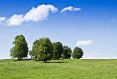 Landscape. Linden trees under blue sky Stock Photos