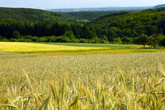 Landscape. With rye and barley field and forest in the distance city Saarlouis, summer, by Honzrath, Saarland / Germany Royalty Free Stock Photography