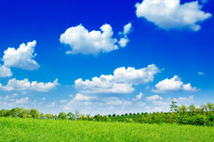 The landscape. The tree, green field, blue sky. The rural landscape Stock Photo