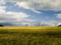 Landscape. Bavarian landscape with clouds and a yellow wheat field royalty free stock image