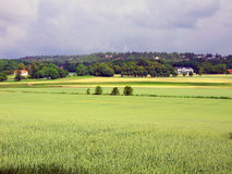 Landscape. Rural landscape with farms and fields. Norway royalty free stock photo