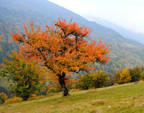 Landscape. Autumn day in the mountains of the Carpathi Royalty Free Stock Photos