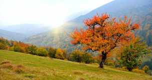 Landscape. Autumn day in the mountains of the Carpathi Royalty Free Stock Photo