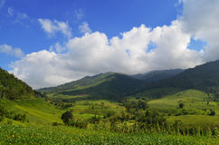 Landscape. Summer landscape in mountains and the dark blue sky with clouds at thailand Stock Photo