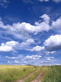 Landscape. A beautiful landscape of a grassy field and road in Poland, with large white clouds overhead Stock Photos