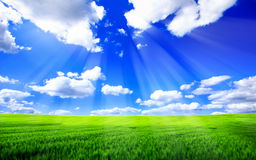Landscape. Beautiful blue sky and green grass landscape Royalty Free Stock Photos