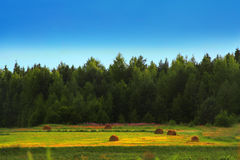 Landscape. Green field and summer wood Stock Photography