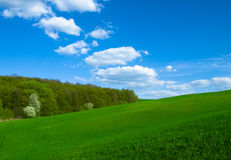 Landscape. Green filed, the blue sky and white clouds Royalty Free Stock Image