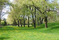 Landscape. Of trees, green grass with yellow flowers Stock Photo
