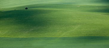 Landscape. Green field and Tree - Landscape Royalty Free Stock Images
