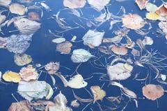 Landscape湖 免版税库存图片