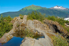 Landscape 6315. A glacial tide pool near Mendenhall Glacier in Juneau, Alaska Royalty Free Stock Photos