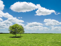 Landscape. Fields, trees, clouds and sky Stock Photos