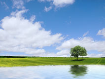 Landscape. Field, water, sky and trees Royalty Free Stock Image