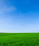 Landscape. Summer landscape Stock Images