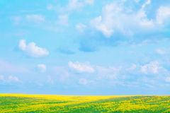 Landscape. Blue sky and green field with yellow flowers Stock Photos