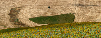 Landscape. A landscape with the fields of sunflowers Royalty Free Stock Photo
