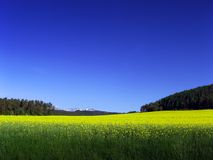 Landscape. In Slovakia landscape meadows nature Royalty Free Stock Images