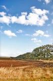 Landscape. In Bessarabia, Ukraine field Stock Image