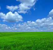Landscape. Green grass and blue sky Royalty Free Stock Photography