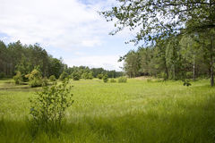 Landscape. Timber year landscape. meadow, wood Stock Photos