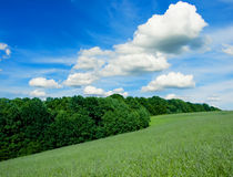 Landscape. Green filed, the blue sky and white clouds Royalty Free Stock Photography