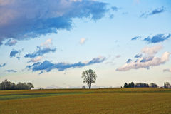 Landscape with acres,trees and dark clouds Royalty Free Stock Photography
