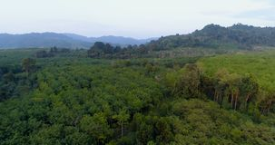 Landscape. Aerial. Jungle. Thailand. Top view of the hills covered with jungle. Thailand.  Aerial stock footage
