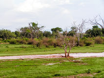 Landscape Africa. Masai Mara Nationalpark Stock Images
