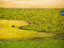 Landscape Africa. Masai Mara Nationalpark Stock Photography