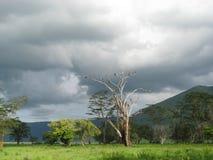Landscape of Africa (Tanzania) Royalty Free Stock Photo