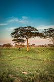 Landscape of africa trees and Monkeys Stock Photo