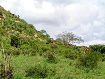 Landscape Africa. In Tsavo Nationalpark Royalty Free Stock Photo