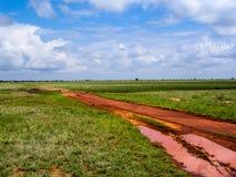 Landscape Africa. In Tsavo Nationalpark Stock Images