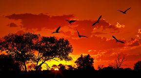 Landscape of Africa with warm sunset. Beautiful nature, dramatic red sky, silhouettes of big Ibis birds, wildlife safari, Eco travel and tourism, South Africa