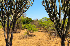 Landscape of African bush in summer Stock Photography