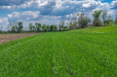 Landscape with an agricultural crops field before thunderstorm Stock Photo