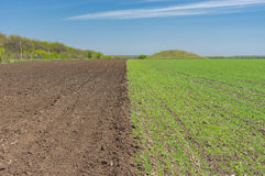Landscape with an agricultural field divided on two section - arable one and winter crops one Stock Photo