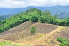 Landscape of agricultural field with mountain, Agriculture scene, Forest destruction. Thailand Stock Photos