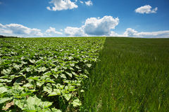 Landscape Agriculture Royalty Free Stock Images