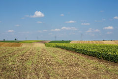 Landscape Agriculture Royalty Free Stock Photos
