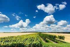 Landscape Agriculture Stock Image