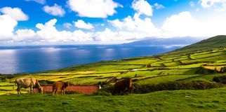 Landscape with agriculture fields at Corvo island, Azores, Portugal. Landscape with agriculture fields at Corvo island in Azores, Portugal Royalty Free Stock Photography