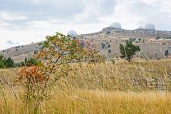 Landscape from Ai-Petri Mountai. Landscape with dog-rose bush from Ai-Petri Mountain in Crimea, Ukraine stock photography